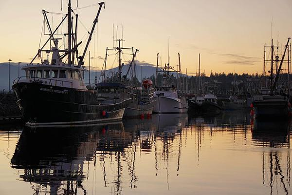 Boats fill the waters of Comox Harbour in British Columbia, Canada