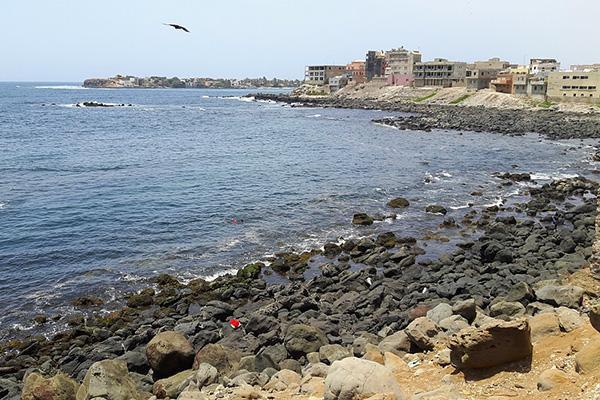 A bird sails over the rocky coast of Dakar, Senegal