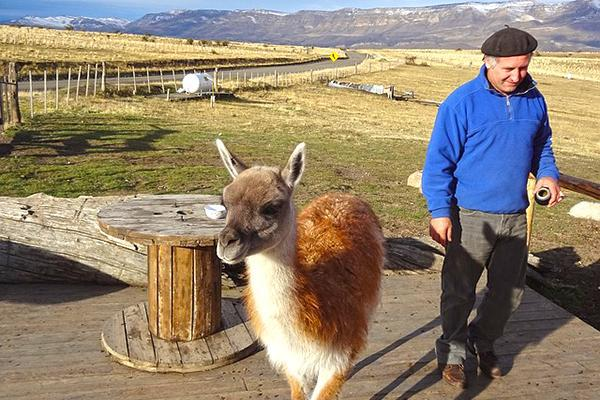 A man stands next to a guanaco in Patagonia, near El Calafate, Argentina