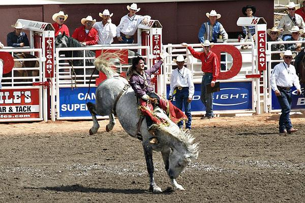 A cowboy rides a horse at the Calgary Stampede in Alberta, Canada