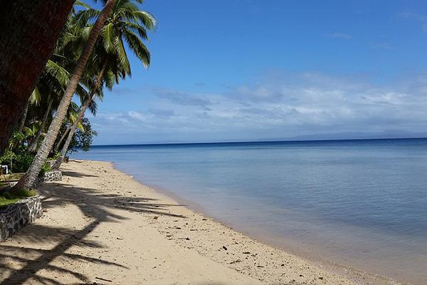 Palm trees lean over a serene beach in tropical Fiji in the Pacific Islands
