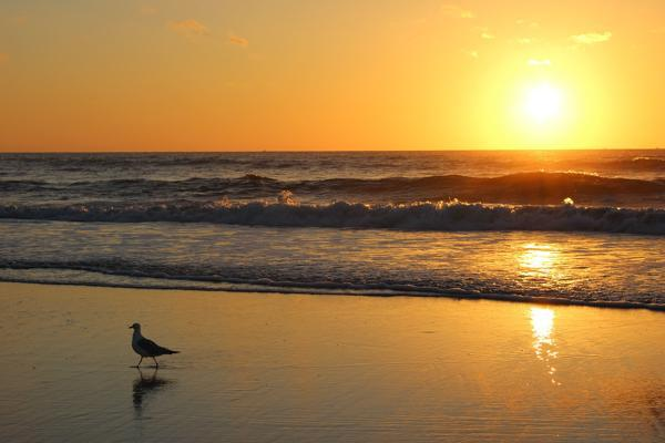 A seagull enjoys the early morning sunlight on the beach in Jacksonville, Florida