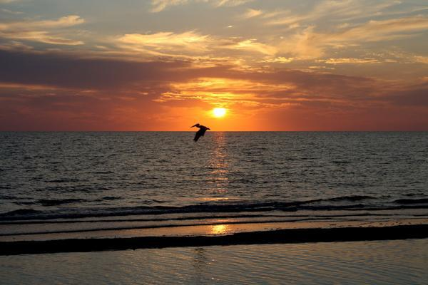 A pelican crosses in front of the sun on a beach in Naples, Florida