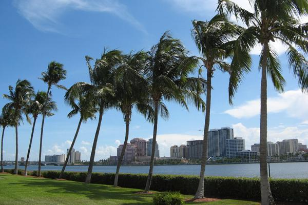 Palm trees bend in the wind in the city of West Palm Beach, Florida