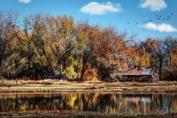 The trees turn bright colours during Autumn near Fort Collins, Colorado