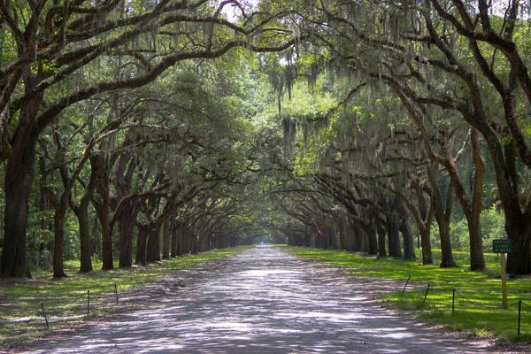A path leads through large oak trees draped in Spanish moss in Savannah, Georgia