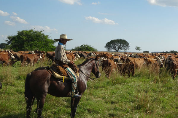 Explore gaucho culture with a Buenos Aires motorhome round trip.