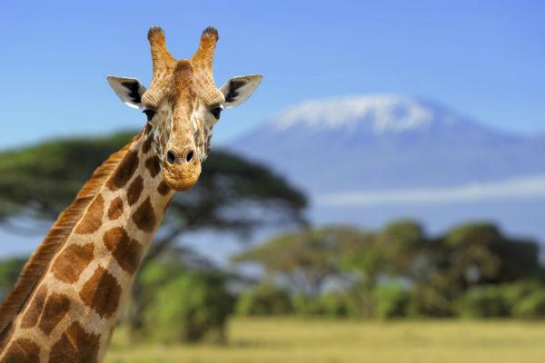 Wohnmobil mieten in Tansania und die Schönheit Tansanias entdecken