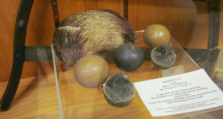 The world's largest pig hairball