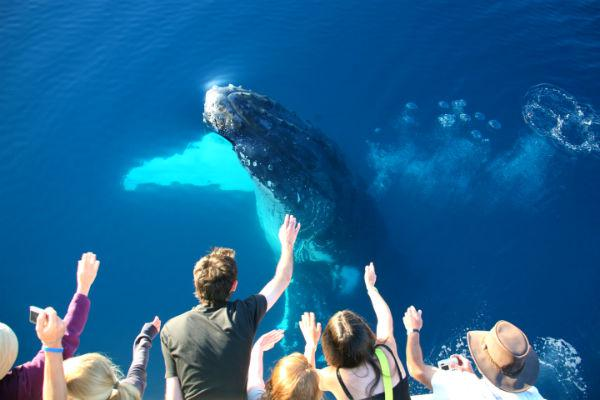 Opt for a spot of whale watching on Hervey Bay and you could find yourself face to face with a majestic gentle giant.