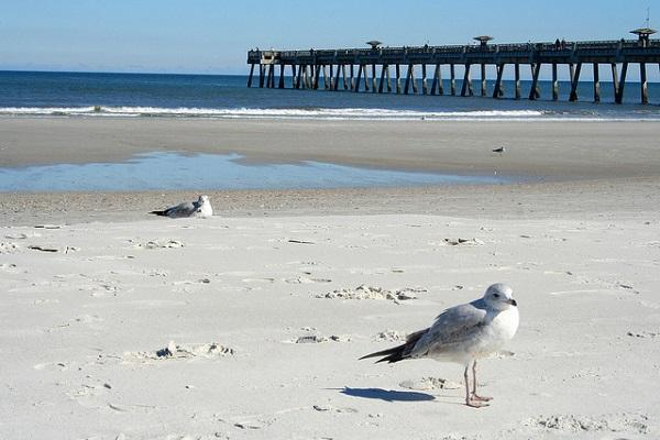 Seagulls at Jacksonville Beach