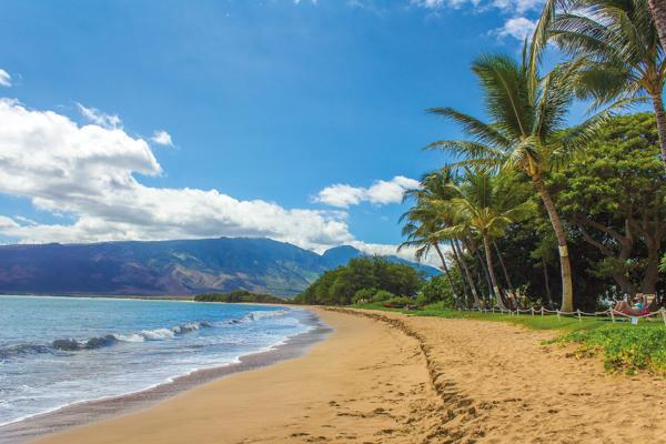 Palm trees hang over the beach as tourists relax on Kihei just outside of Kahului, Hawaii