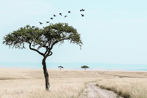 Birds fly over the unique and serene landscape of the Masai Mara in Kenya