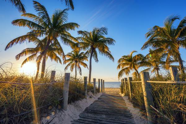 Key West has palm trees galore
