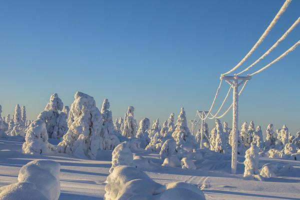 Frozen, snow-covered trees and power lines in Lapland