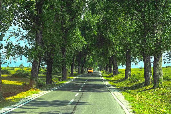 A van drives toward the camera on a road lined with lush green trees in Kosovo