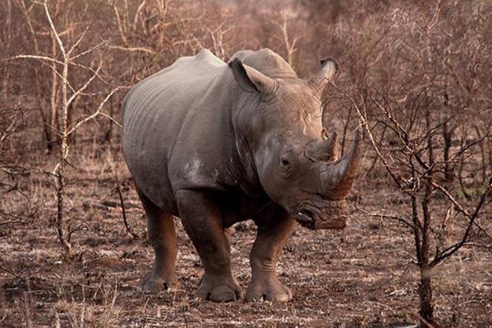 南非房车自驾游克鲁格国家公园