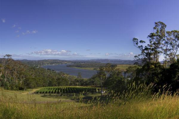 The verdant Tamar River Valley is the perfect spot for a leisurely winery tour among the many vineyards.