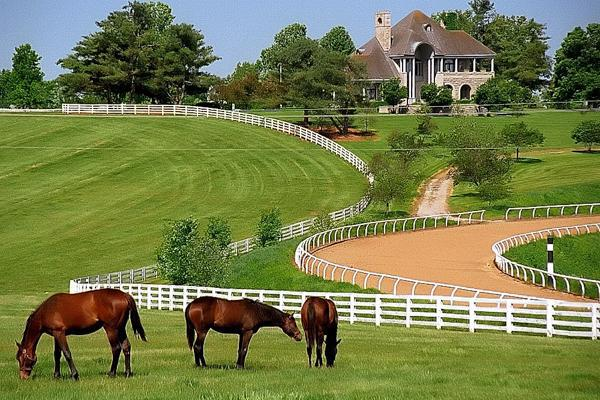 Green pastures keep the horses well fed at a farm in Lexington, Kentucky