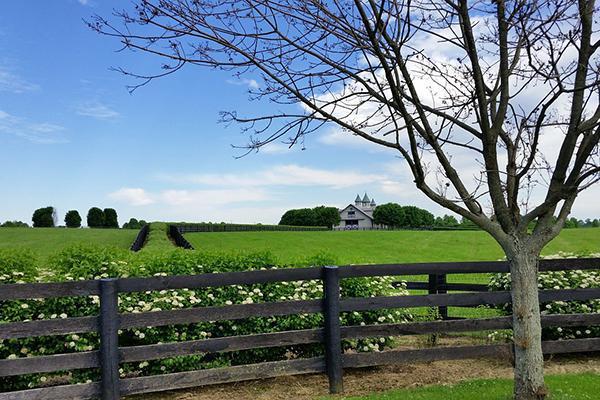 A Kentucky farmhouse sits amongst lush greenery on a clear day.