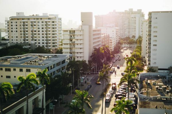 Palm trees line the streets in downtown Miami, Florida