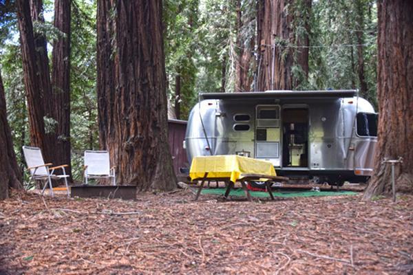 Campervan nestled amongst giant trees at Fernwood Campground