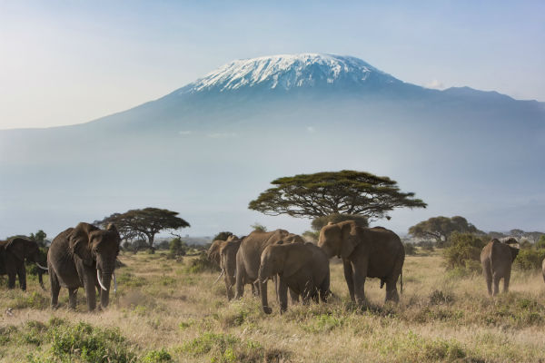 Mount Kilimanjaro is Tanzania's most iconic feature, but it's far from the country's only attraction.