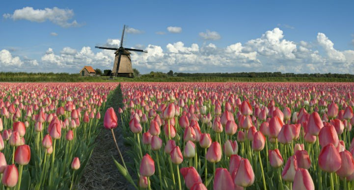 Netherlands goes far beyond merely windmills and tulips.