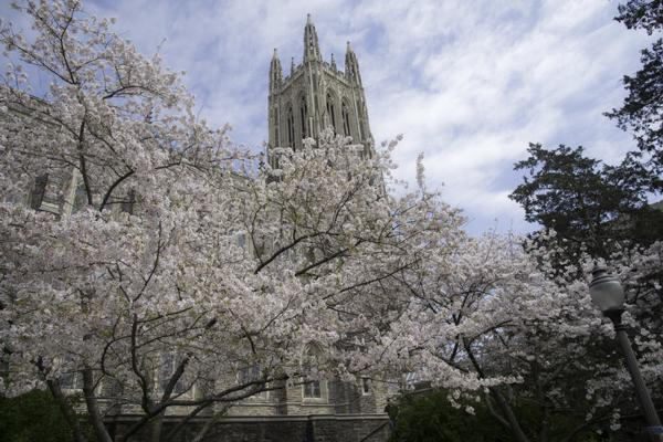 A tree blossoms on the Duke University campus in Durham, North Carolina