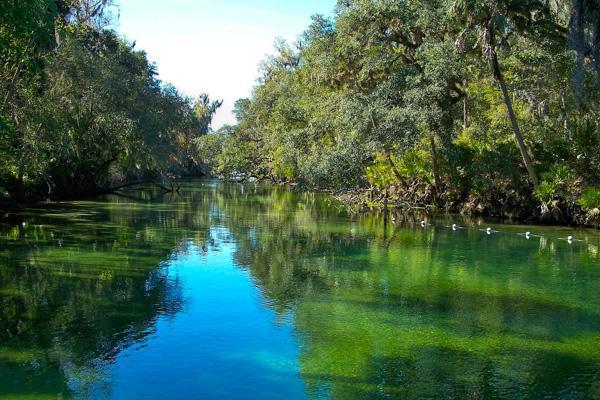 Blue Springs River, Ocala California