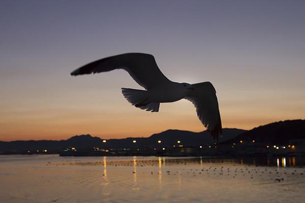 A bird flies over the coast of Olbia in Sardinia at sunset