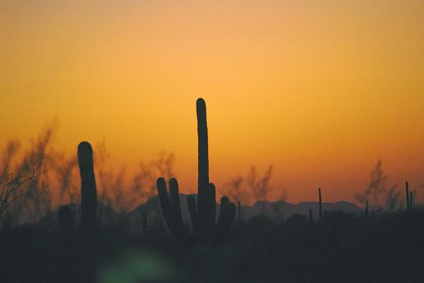 Cacti poke out above a Phoenix, Arizona sunrise with mountains in the distance