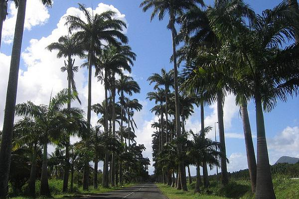 Driving in Guadeloupe is a tropical delight