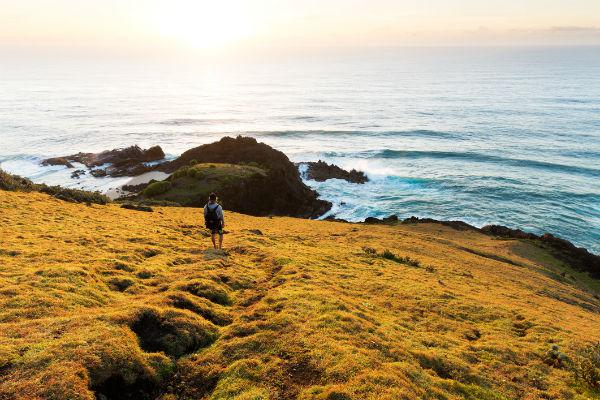 Invigorate your senses with one of Port Macquarie's stunning coastal walks, and discover the local wildlife.