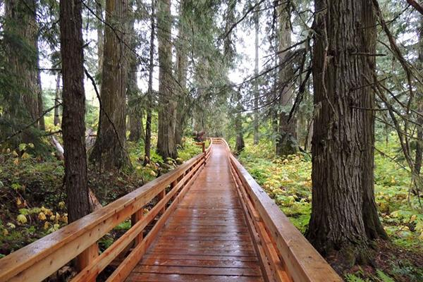 A wooden pathway leads through the forest in the Rocky Mountains region east of Prince George, BC