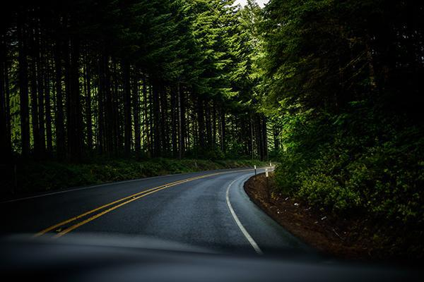 A road winds through thick trees in Oregon