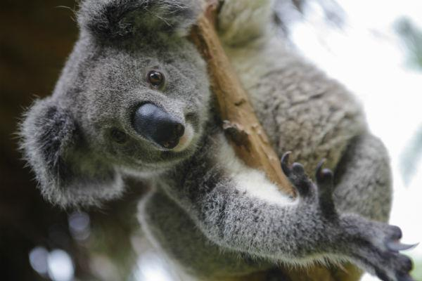 For a surefire family treat, head to Rockhampton Zoo.