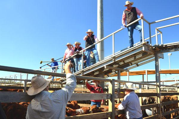 Roma's cattle saleyards are legendary, and an integral hub for the town.