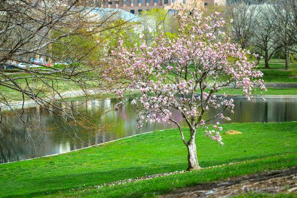 St. Louis has many beautiful green spaces where you can unwind and escape the big city rush.