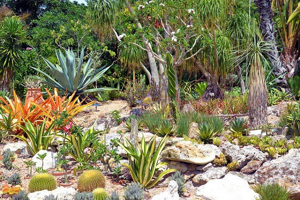 The fascinating Marie Selby Botanic Gardens in Sarasota