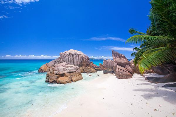 Green palm trees fan out over the white sand as blue water laps the shore in the Seychelles