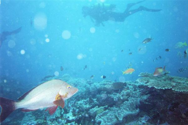 Sodwana Bay on the eastern coast of South Africa has been named one of the top dive spots on earth.