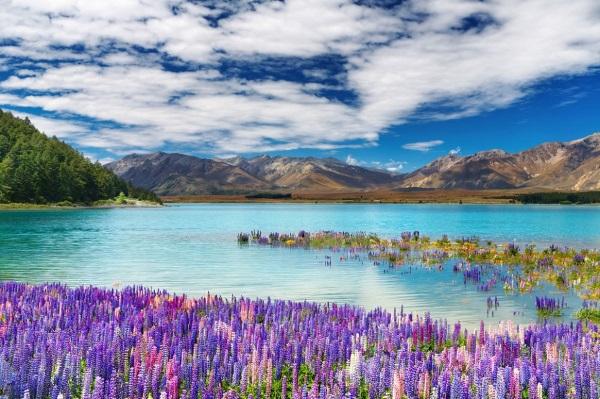 新西兰房车自驾游的美景图片