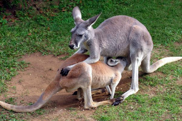 Australia Zoo, made famous by Steve Irwin, is set on the Sunshine Coast and well worth a visit.