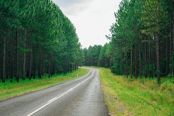 A road cuts through a lush green forest on the Sunshine Coast in Queensland, Australia