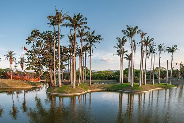Tall palms reach toward the sky in Miranda Park, Caracas, Venezuela