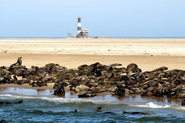Seals gather at a beach at Pelican Point in Walvis Bay, Namibia