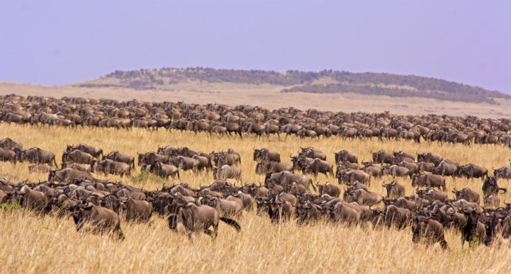 塞伦盖蒂国家公园,坦桑尼亚